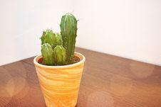 Free Cactus On Pot Stock Photography - 126187192