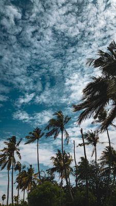 Free Coconut Trees Under Cloudy Sky Stock Images - 126187204