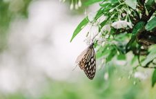 Free Brown And White Butterfly On White Flowers Selective-focus Photography Stock Photo - 126187230