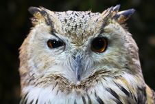 Free Closeup Photography Of White And Brown Owl Royalty Free Stock Image - 126187446