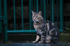Free Brown Tabby Cat Sitting Near Steel Gate Outdoors Royalty Free Stock Images - 126187519