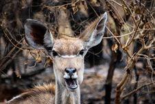 Free Brown Deer Beside Brown Leaves Royalty Free Stock Photography - 126187627
