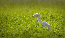 Free White Bird On Ground Royalty Free Stock Photos - 126187828