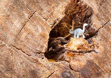 Free White Dinosaur Figurine On Wood Log Royalty Free Stock Images - 126187859