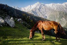 Free Brown Horse Standing Gray Mountain Stock Photos - 126187903