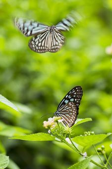 Free Butterflies Perched On Flower Royalty Free Stock Images - 126188089