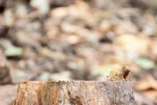 Free Lion Figurine On Tree Stump Stock Images - 126188104