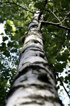 Free Low Angle Photography Of Tall Tree Stock Image - 126188111