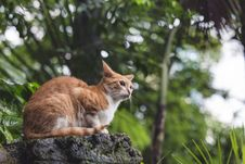 Free Adult Orange Tabby Cat Sitting On Boulder Royalty Free Stock Images - 126188279