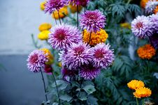 Free Selective Focus Photography Of Purple Flower Stock Images - 126188414
