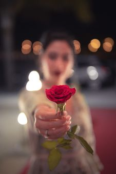 Free Selective Focus Photo Of Red Rose Royalty Free Stock Photography - 126188507