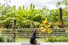 Free Dog Sitting On Rug Overlooking Green Leafed Plants Stock Image - 126188621