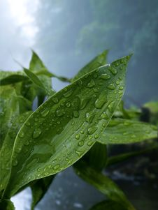 Free Green Leaf Plant With Droplets Stock Image - 126188641