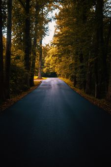 Free Concrete Road Between Trees Royalty Free Stock Photos - 126188758