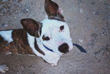 Free Photo Of Dog Looking Upward Towards Camera Royalty Free Stock Images - 126189089