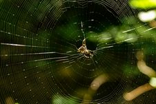 Free Brown Spider On Spiderweb Royalty Free Stock Images - 126189179