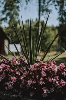 Free Shallow Focus Photography Of Pink Flower Bush Stock Photography - 126190072