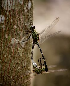 Free Shallow Focus Photography Of Two Green Dragonflies Royalty Free Stock Photos - 126190218