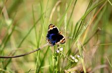 Free Blue And Brown Butterfly Perched On Grass Stock Photography - 126190252