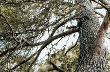 Free Low Angle Photo Of Tree Royalty Free Stock Photos - 126190338