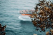 Free Shallow Focus Photography Of Green Tree Near Body Of Water Royalty Free Stock Photography - 126190467