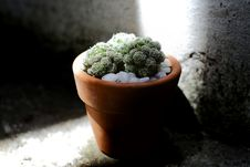 Free Green Cacti Planted On Brown Terracotta Pot Royalty Free Stock Photos - 126190558