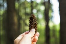 Free Person Holding Pine Cone Stock Photos - 126190833