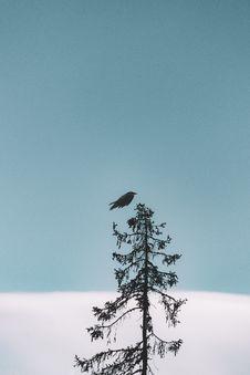 Free Flight Of Black Bird Above Tree Royalty Free Stock Photos - 126191058