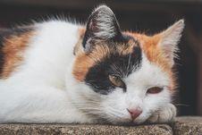 Free Black, White And Orange Cat Outdoor Royalty Free Stock Image - 126191206