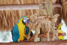 Free Macaw Perching Beside Rope Stock Photography - 126191552