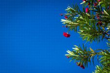 Free Red Flowers Royalty Free Stock Image - 126191656