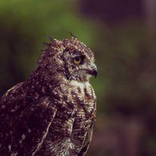 Free Photo Of Brown Owl Royalty Free Stock Photos - 126191658