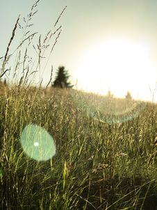 Free Close-up Photo Of Wheats On Field Stock Photo - 126191770