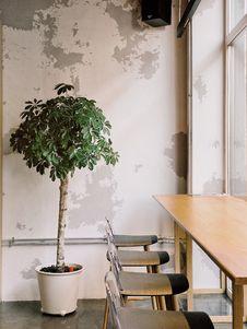 Free Plant Indoors Stock Photos - 126191953