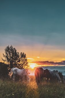 Free Four Assorted-color Horse On Grass Fields Near Tall Trees During Sunset Stock Photography - 126191972