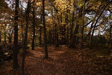 Free Autumn Season Stock Photo - 126192060