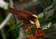 Free Selective Focus Photography Of Bird Perching On Bird Feeder Stock Image - 126192201