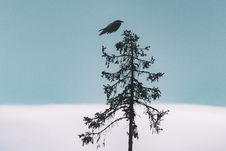 Free Black Bird Flying Over Tree Royalty Free Stock Photography - 126192267