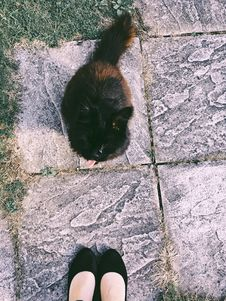 Free Black And Brown Cat Sitting On Ground Near Woman Stock Images - 126192594