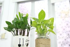 Free Two Green Leaf Potted Plants Near Wall Royalty Free Stock Images - 126192759
