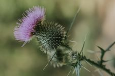 Free Selective Focus Photography Of Purple Thistle Flower Stock Photos - 126193003