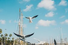 Free Low Angle Photography Of Flying Gulls Under Blue Sky Stock Images - 126193094