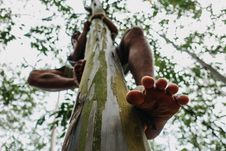 Free Man Climbing Tree Royalty Free Stock Photos - 126193158