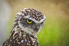 Free Selective-focus Photography Of Brown Owl Stock Photography - 126193212