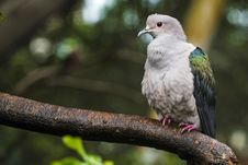 Free Beige And Green Short-beak Bird Perched On Trunk Royalty Free Stock Photography - 126193217