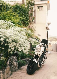 Free White And Black Motor Scooter Parked Besides White Petaled Flowers Near White Building Stock Images - 126193564