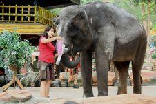 Free Person Feeding The Elephant Stock Photo - 126193960
