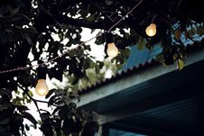 Free Shallow Focus Photography Of String Lights On Tree Stock Images - 126194244