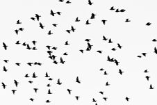 Free Low Angle Photography Of Flock Of Flying Birds Stock Image - 126194251