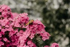 Free Selective Focus Photography Of Butterfly Perched On Flowers Stock Images - 126194954